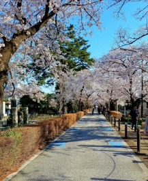Aoyama Cemetery in the Minato-ku district of Tokyo